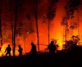 Dichiarazione dello stato di grave pericolosità per gli incendi boschivi